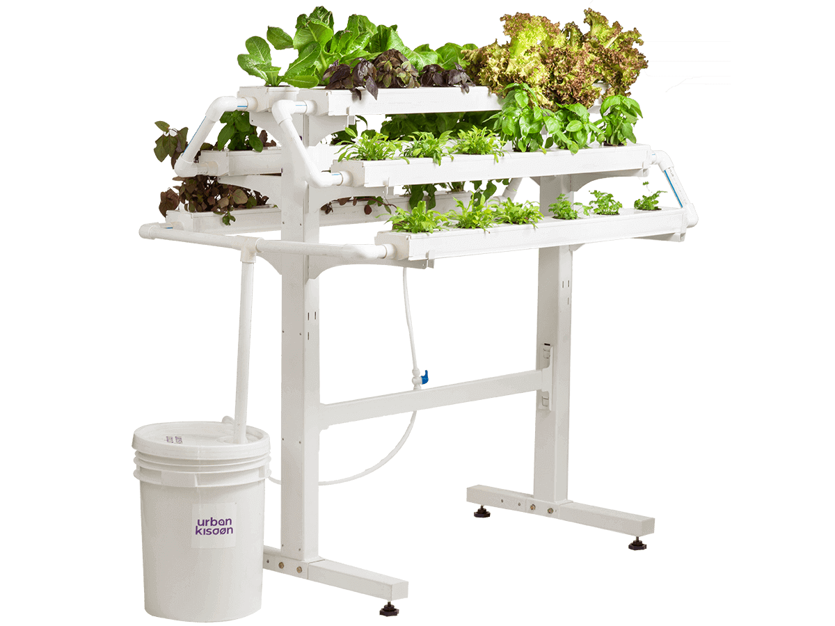 Hydroponics 36 plant model kit from Urban Kisaan based on soil less indoor farming technology